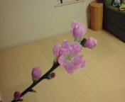 ベストムの桃の花